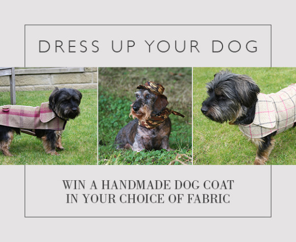dress_up_your_dog_insta_jan_17 (1)