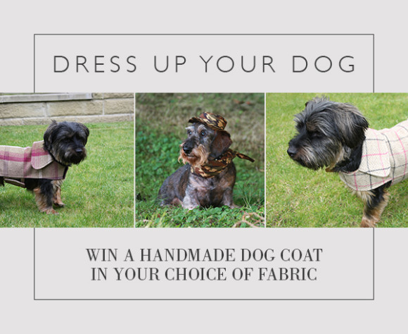 Dress up your dog competition